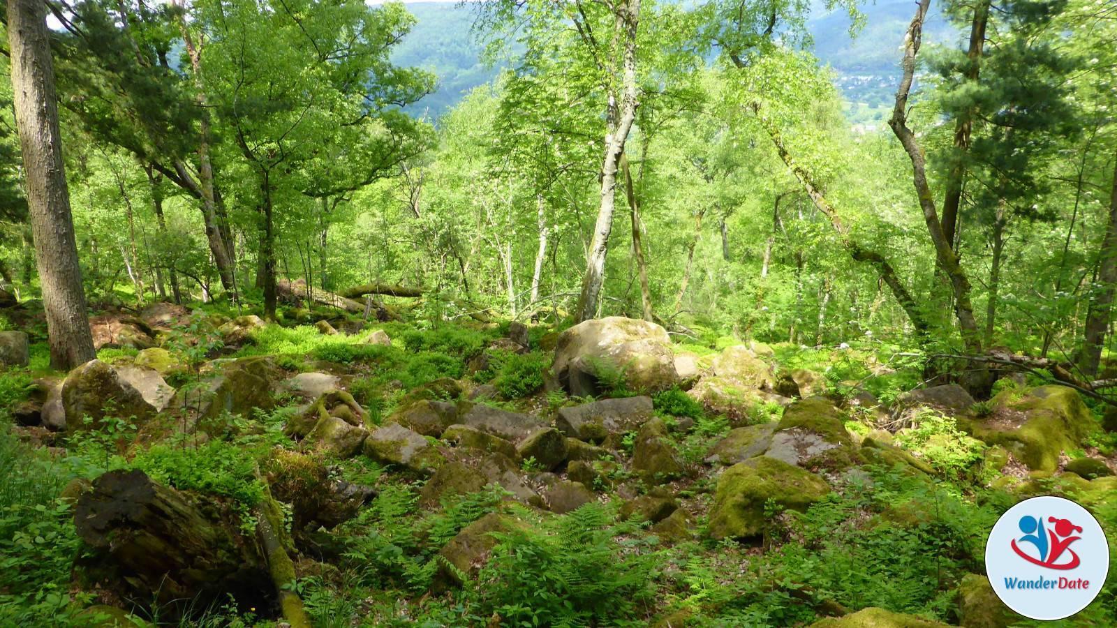 Singlereisen heidelberg